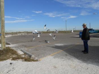 feeding gulls (2)